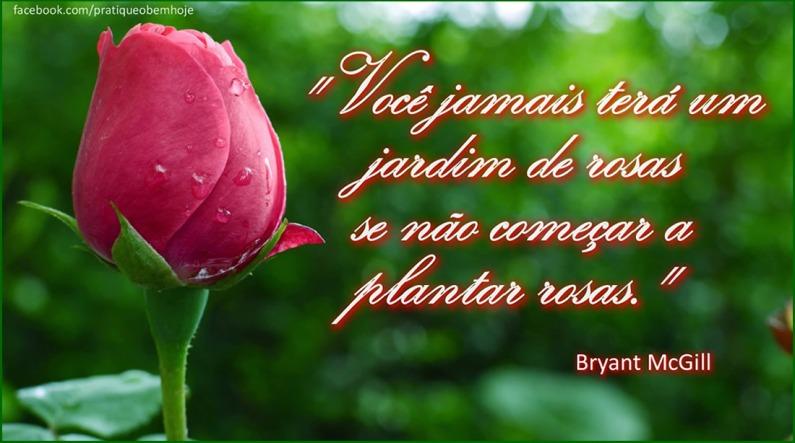 Você jamais terá um jardim de rosas se não começar a plantar rosas