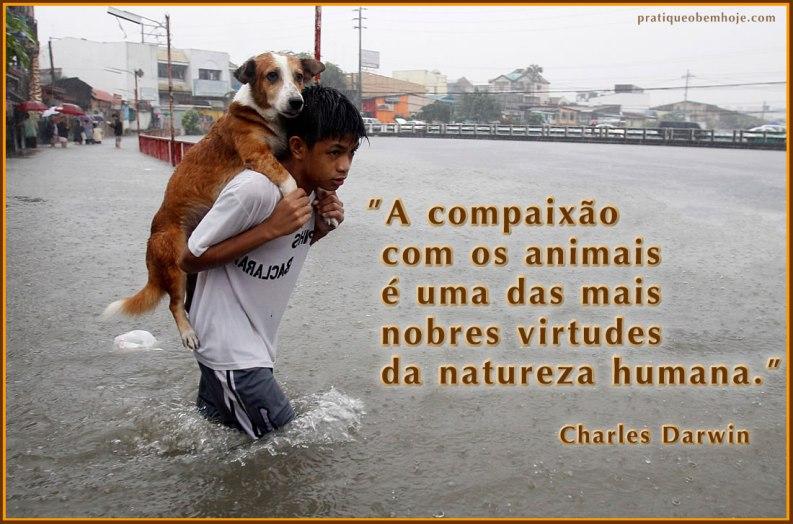 A compaixão com os animais