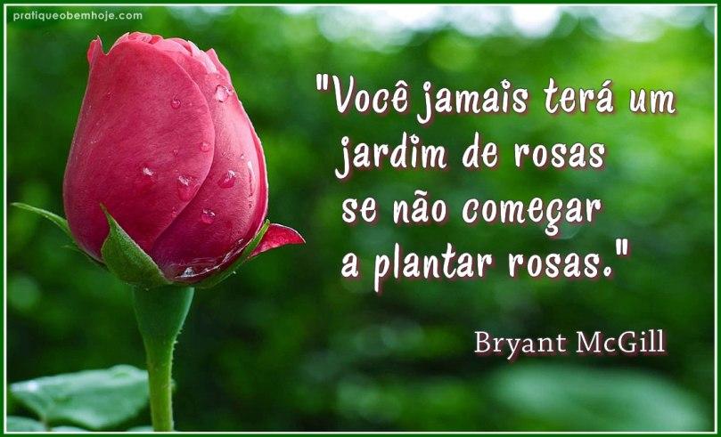 Você jamais terá um jardim de rosas se não começar a plantar rosas 2