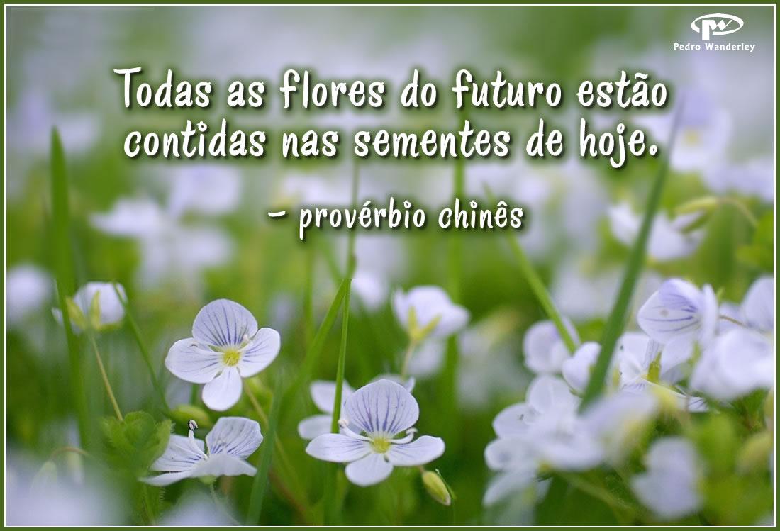 Todas as flores do futuro estão contidas nas sementes de hoje