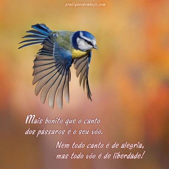 Mais bonito que o canto dos pássaros é o seu vôo