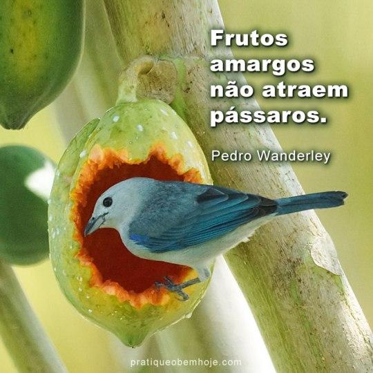 frutos amargos não atraem pássaros