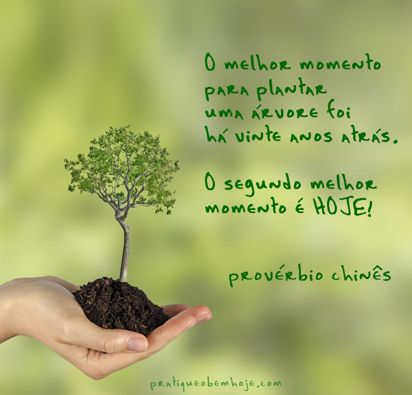 O melhor momento para plantar uma árvore